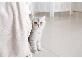 美丽的灰色黄眼睛猫猫站在白色地板上_2612787