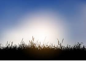 蓝天衬托下青草景观的剪影_4427746