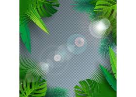 热带棕榈叶透明背景夏季矢量插图_5021684