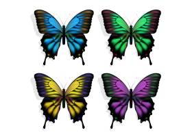 白色上有蓝绿紫黄四色蝴蝶_11060543