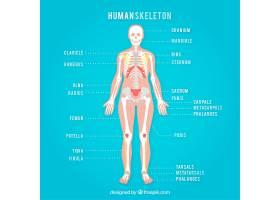 蓝色背景上的人类骨架_837116