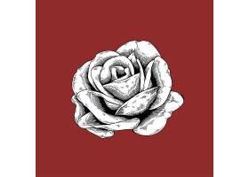 玫瑰在红色背景上绘制花朵自然矢量图标_2902304
