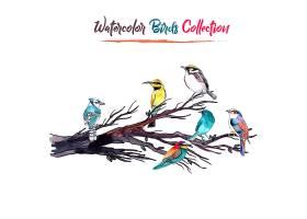 水彩画鸟类收藏集_1182167