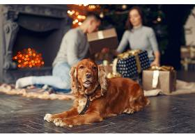 一家人在圣诞树附近的家里养着可爱的狗_11242671