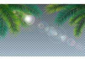 透明的热带棕榈叶夏季插图_5041109