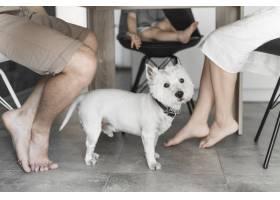 桌子下面有只可爱的狗家人坐在椅子上_3442709