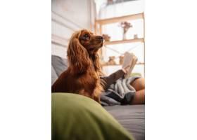 可爱的女孩和小狗在沙发上拥抱使用现代设_11530341
