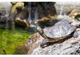 两只乌龟在岩石上被太阳照亮_10962206