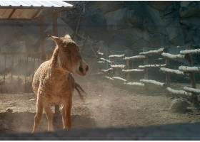 木栅栏附近农场里一头棕驴的特写镜头_7810476