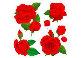逼真的玫瑰花图标集_4385571