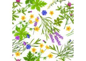 草本植物与野花天衣无缝的图案_3796605