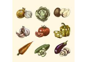 蔬菜素描套色_3924699
