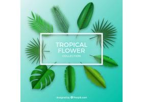 现实主义风格的热带花卉收藏_2181849