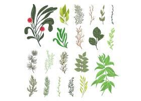 绿色森林树叶草本植物枝条热带绿色植物_5042218