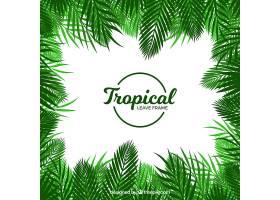 热带树叶的框架是扁平的_2314797