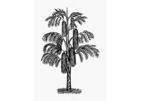 热带树木古董画_4258305