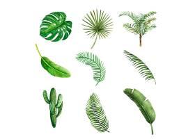 热带植物水彩创意元素矢量插图设计_5589372