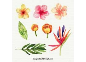 水彩画风格的热带花卉收藏_2207649