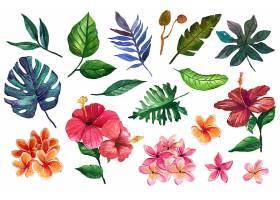 暖色的花朵和热带树叶_8355252