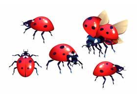 有红色和黑色斑点的瓢虫_6428669