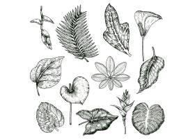 手绘热带植物单色套装_9461643