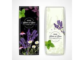 带有野花和香料的草药横幅_3797967