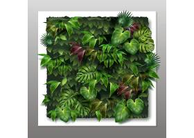 带有热带绿叶的方形垂直花园或绿色墙壁_11053342