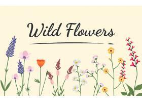 各种野花插图_2611284