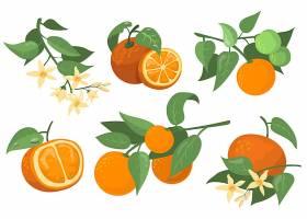 五颜六色的橙色树枝和鲜花扁平的项目套装_11671399