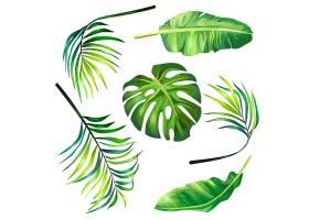 一套热带棕榈叶的植物矢量插图风格逼真_1265743