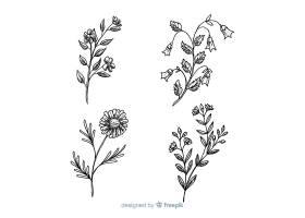 黑白野花收藏_5445509