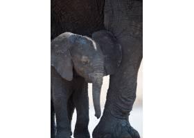一头小象站在母象旁边的特写镜头_10186469