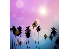 落日天空衬托下棕榈树的剪影_1172494
