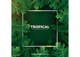 热带背景绿色植物_2210894