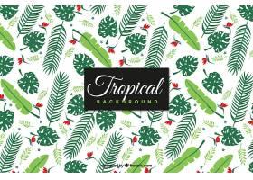 热带背景与不同种类的植物_2222373