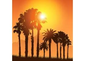 日落的天空映衬着棕榈树的轮廓的热带景观_897845