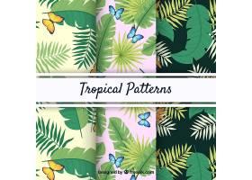 一套不同植物的热带夏季模式_2211611
