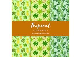 一套不同植物的热带夏季模式_2211612