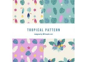一套热带图案带有扁平样式的植物和巨嘴鸟_2206876