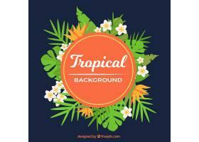 不同植物的热带背景_2196041
