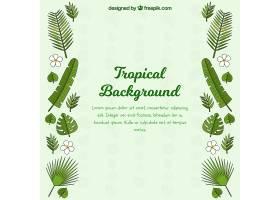 不同植物的热带背景_2211144