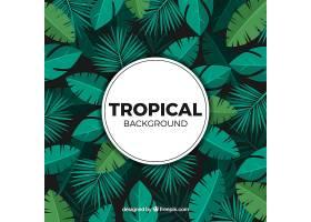 不同植物的热带背景_2226863