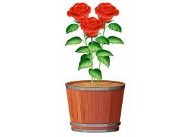 一盆玫瑰花_2413123