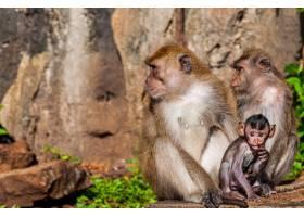 丛林岩层附近一个可爱的猴子家庭的特写镜头_9077424