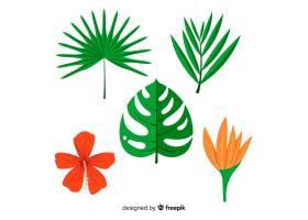热带树叶和花朵_4343528