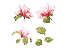 木兰花收藏水彩画上孤立的写实树叶和花朵_5501975