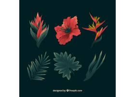 手绘一套五颜六色的热带花卉_2659459