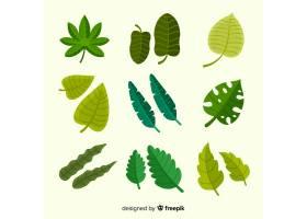 平面设计的充满异国情调的热带树叶收藏_2741245