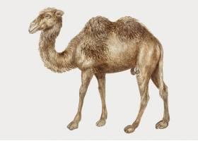复古风格的骆驼_3849586