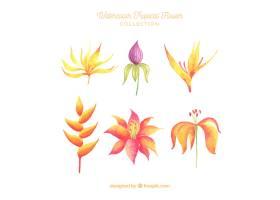 可爱的水彩画热带花卉收藏_2719470